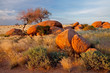 Granite boulders and trees, Namibia, southern Africa