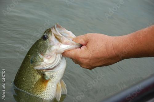 Fotobehang Vissen fisherman with bass
