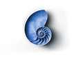 Leinwandbild Motiv Nautilus Muschel