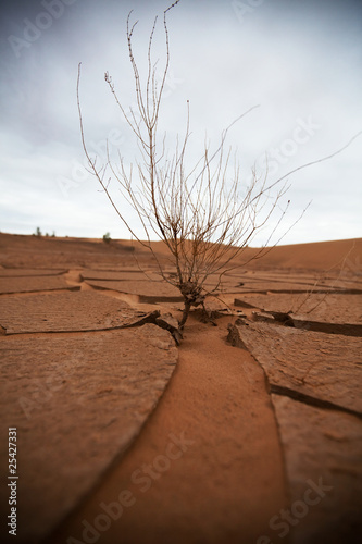 Drought lands - 25427331