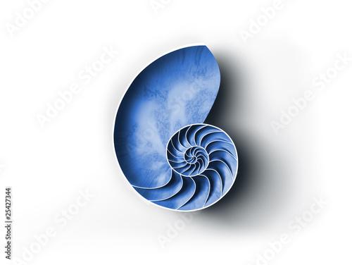 Leinwanddruck Bild Nautilus Muschel