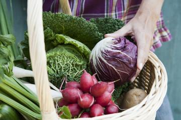 Deutschland, Bayern, Person halten Korb mit frischem Gemüse, detail