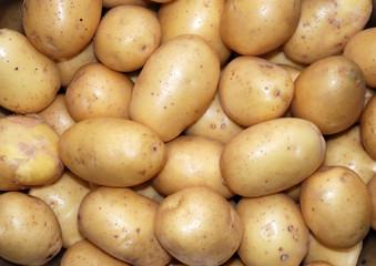 Frühkartoffeln q.