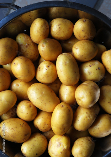 Frühkartoffeln h.