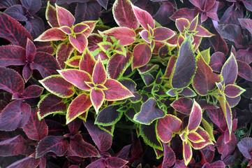 Closeup Ornamental Plants