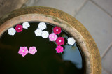 Pink and white flowers float in water garden