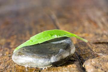hoja verde y piedra