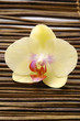 Bright orchid on bamboo mat
