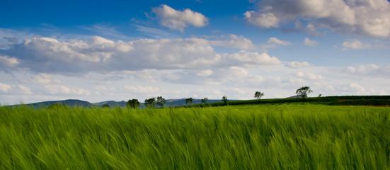 Campos verdes y cielo azul