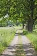 Rural landscape road