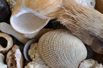 Muscheln und Schneckenhaus