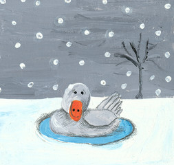 Baby swan in the winter