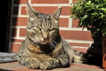 Wachende Katze