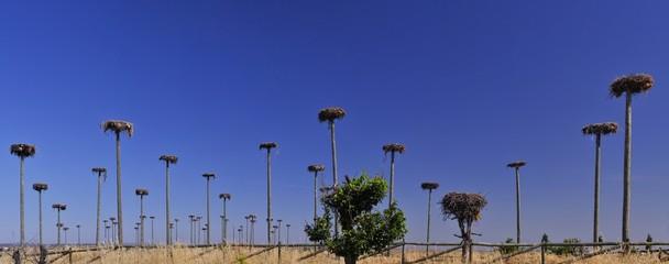 Cigüeñas,Caceres,España