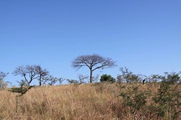 Sudafrica 5
