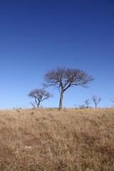Sudafrica 3