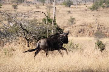 Sudafrica - reserva