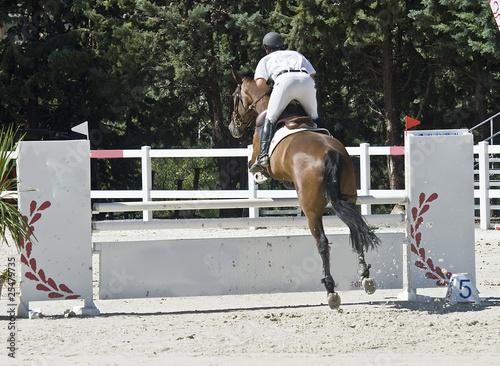 Jinete y caballo saltando.