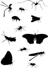 collection of twelve insects