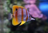 Fototapete Aquarium - Tierpark - Fische