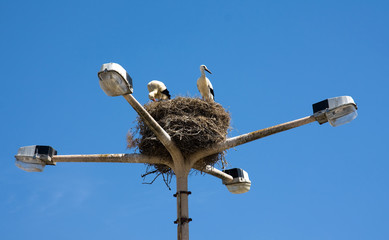 Two stork on nest in a light pole, Algarve Portugal