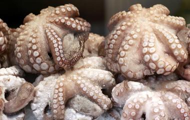 Oktopusse