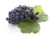 Grappe dde raisin noir