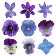 Collection of blue flowers