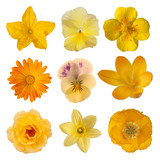 Fototapety Collection of yellow/orange flowers