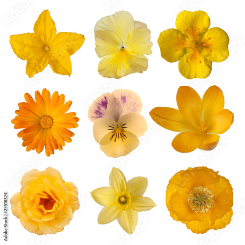 Canvas Narcis Collection of yellow/orange flowers