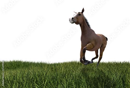 pferd galoppiert auf wiese
