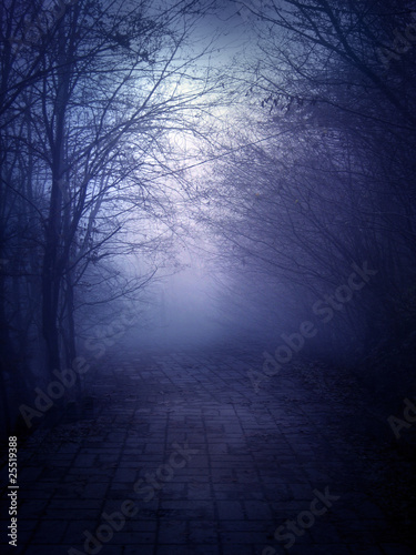 Dark Forest Trail