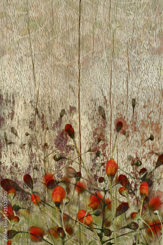 Red flowers on grunge wood background