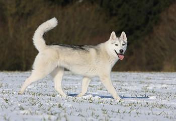 un chien heureux dans la neige