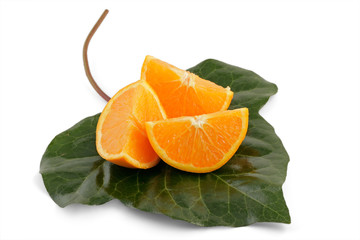 Orange slices and decorative leaf on white