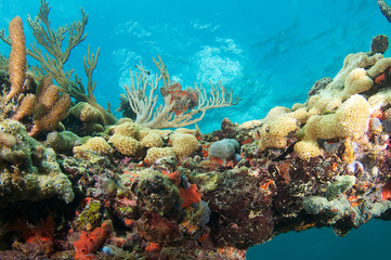 Coral Outcrop picture taken in south east Florida