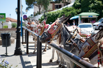 Donkeys in Mijas (Andalusia, Spain)