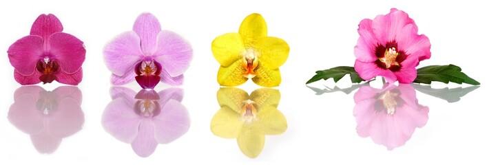 Orchideenblüten und Hibiscus (Set)