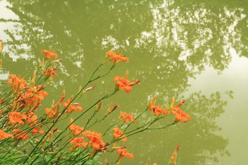 Flores naranja sobre el río