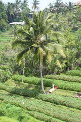 Bali , Indonesia
