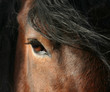 Fototapeten,pferd,einhufer,biest,tier