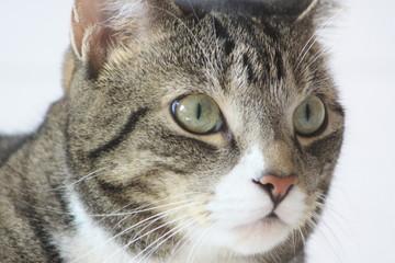 Katzen in Nahaufnahme