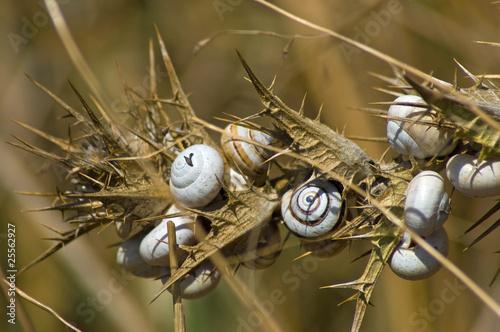 Snails Spain