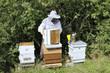 Travail de l'apiculteur au rucher