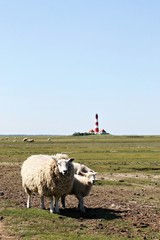 Schafe und Leuchtturm - Sheeps and Lighthouse