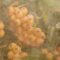 vintage wallpaper background ashberry