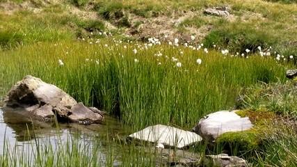 Lac montagne_4