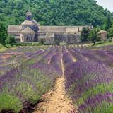 France - Paca - Abbaye de Senanque - 25582545