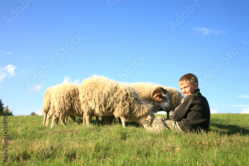Boy and sheeps
