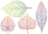 Fototapety textured autmn leaves, vector